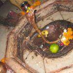 Shivaya Parameshwaraya- Uraltes Mantra für Shiva