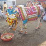 Vorträge zum Yogadarshana: Zusammenfassung des Samadhi Pada