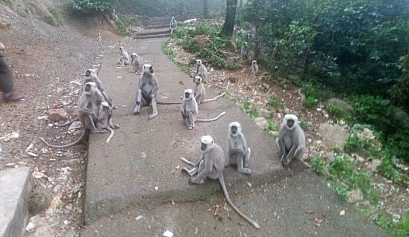 Pilgerer unterwegs nach Neelkanth