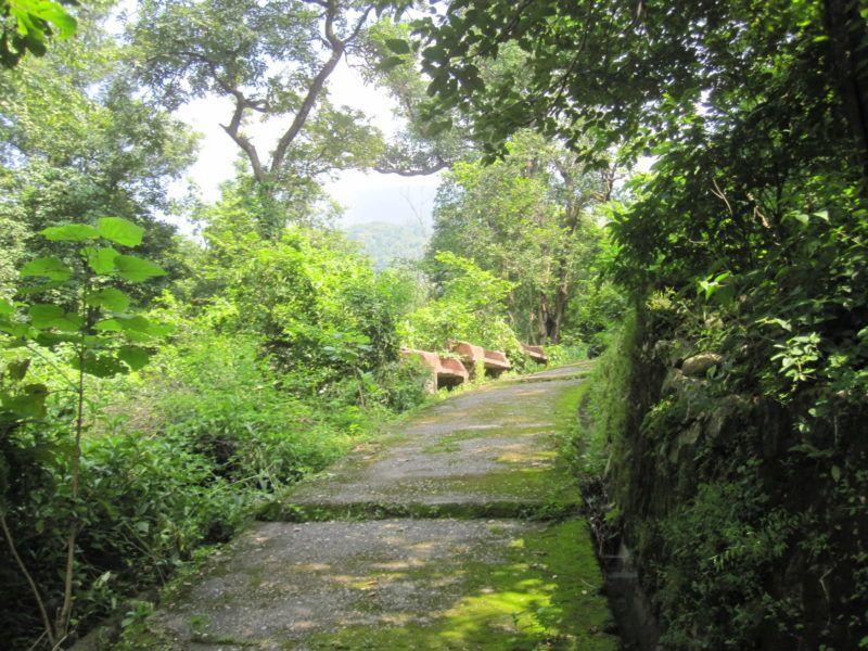 Die Natur holt sich den Beatles Ashram zurück
